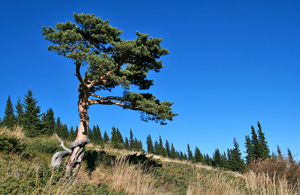 vitosha trekking and walking tours from sofia